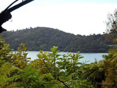Seaviews Surrounded by Primeval Forest